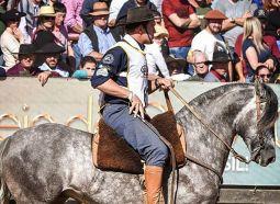 """Cavalo que se alimenta com Rações Dom Joaquim, é premiado  na """"Copa do Mundo do Caval..."""