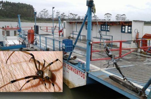 Balsa do Rio Araranguá é alvo de polêmica por conta de 'chuva de aranhas'