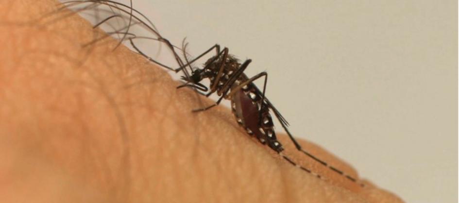 Santa Catarina confirma primeiro óbito por dengue de 2021