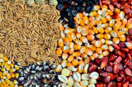 Dia 12 de maio se inicia a capacitação técnica on-line na produção de grãos