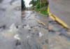 Veículos pesados estão proibidos de transitar pela estrada geral de Laguna