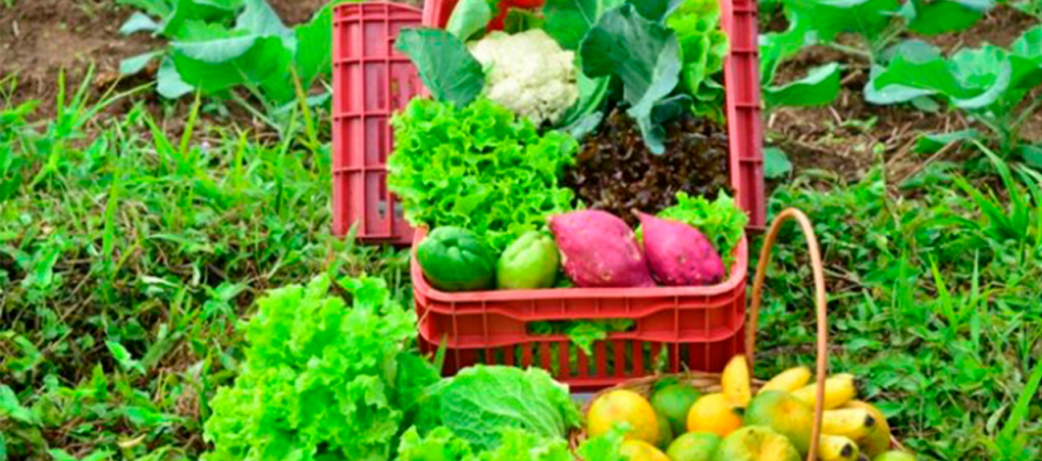 Epagri promove capacitação on-line sobre agroecologia na terça-feira
