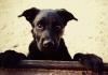 Cães de homem assassinado em Balneário Gaivota são envenenados