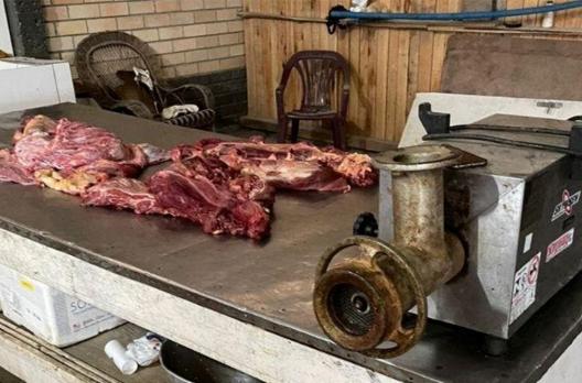 Mais de 500 quilos de carne de cavalo apreendidos no Sul de SC estavam em CTG