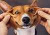 Lei sancionada em SC traz mais 'direitos' aos pets em condomínios
