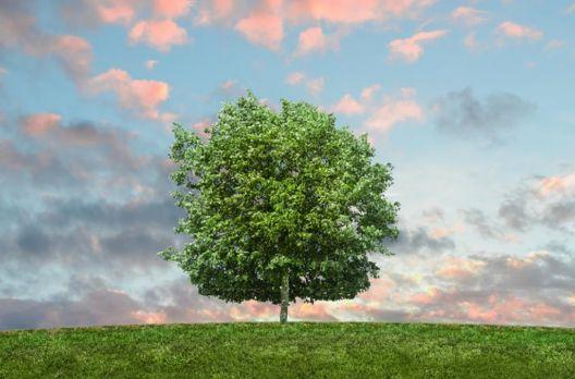 Converse com uma árvore