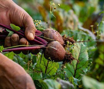 Entrega de produtos agrícolas em domicílio é alternativa segura para produtores e consumidores
