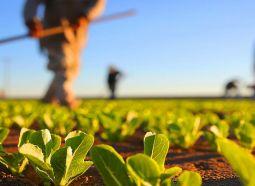 Agricultura: uma grande potencialidade do Extremo Sul