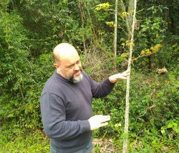 Fragmentos florestais de mata nativa integram espaços de educação ambiental da Satc