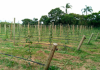 Agricultores de Balneário Gaivota cobram mais apoio para o setor