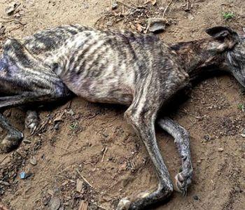 Dono de cão é preso em flagrante por maus-tratos em Araranguá