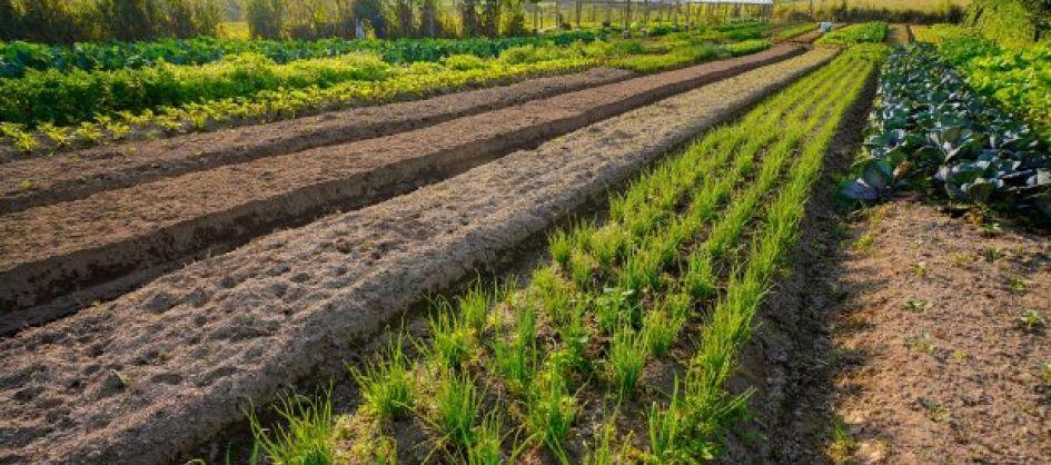 Agricultura inicia distribuição de calcário para aumenta...