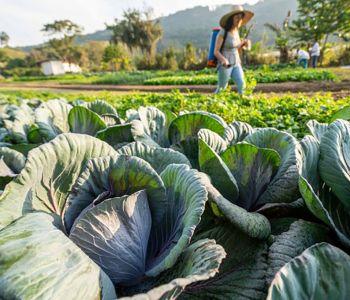 Ações da Epagri levam agricultoras e pescadoras a ocuparem espaços estratégicos nos setores onde atuam