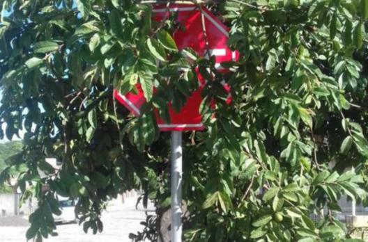 Alerta: Vegetação impede visualização de placa de trânsito em Araranguá