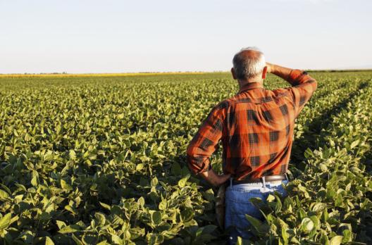 Produtores rurais de Forquilhinha podem retirar autorizações de pastagem de inverno