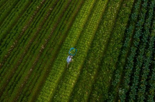 Santa Catarina alcança o maior valor de produção agropecuária da história