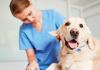 Araranguá: Inscrições para castração gratuita de cães e gatos começam nesta terça