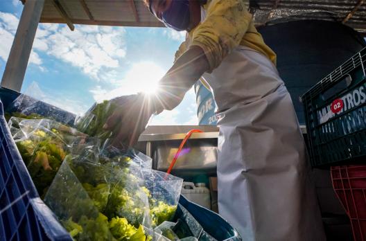 Fapesc seleciona bolsistas para desenvolver inovações para a agricultura e o agronegóci...